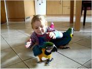 CМы продаем очень дружелюбный синий и золотой попугаев ара.